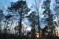Woods At Dusk. (dccradio) Tags: lumberton nc northcarolina robesoncounty outdoor outdoors outside nature natural sky tree trees woods wooded forest march monday spring springtime evening mondayevening goodevening nikon d40 dslr cloud clouds