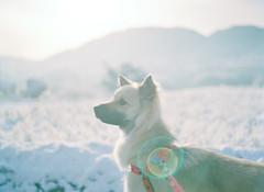 good morning Winter (Kenji Kitae) Tags: dog family animal snow winter white field mountain lifestyle lifework landscape location life hiroshima japan earth