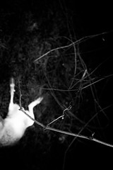(willy vecchiato) Tags: blackandwhite biancoenero monochrome monocramatico mono dark darker oscura obscure nature natura death morte anima animal animale candid tree forest 2019 fuji x100s noir thriller fear mistery mistero