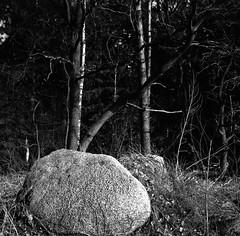 Stone-cold (Rosenthal Photography) Tags: ff120 asa400 analog epsonv800 landschaft mittelformat mediumformat 20190301 rodinal12521°c105min 6x6 ilfordrapidfixer anderlingen städte zeissikonnettar51816 rolleiretro400s dörfer siedlungen stonecold cold winter stone mood landscape trees february zeiss ikon nettar 51816 noval anastigmat 75mm f45 rollei retro retro400s rodinal 125 epson v800