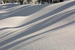 Snow shadow art (KronaPhoto) Tags: 2019 natur vår snow snø shadow skygge art lines pattern linjer nature winter vinter norway white hvit tree tre forest sun sunlight sol soft shapes dof bokeh