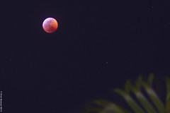 eclipse_2019_4 (acritely) Tags: bloodmoon 2019 eclipse usa wolfmoon