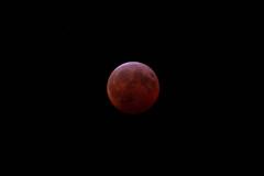 January 2019 - Lunar Eclipse (Keith_Beecham) Tags: lunareclipse pennsylvania usa 2019 unitedstates eclipse wyndmoor january