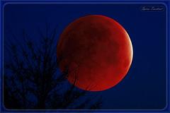 Υπερπανσέληνος - Κόκκινο φεγγάρι - Ολική έκλειψη σελήνης !!! (Spiros Tsoukias) Tags: hellas ελλάδα θεσσαλονίκη κέρκυρα χλωμόσ greece corfu chlomos σελήνη υπερπανσέληνοσ έκλειψησελήνησ κόκκινοφεγγάρι φύση ουρανόσ δέντρα νύχτα mooneclipse redmoon nature sky trees night tree
