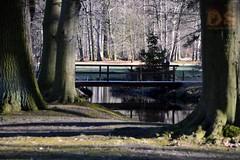 DSC_5728 (Kopie) (Der Spotterfreund) Tags: ds spotterfreund silvio spot spotter spotting spoting cottbus himmel baum bäume gebäude architecktur wasser see tümpel gras wiese wald kunst schloss park