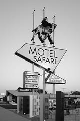 Motel Safari (dangr.dave) Tags: tucumcari nm newmexico downtown historic architecture neon neonsign motelsafari camel