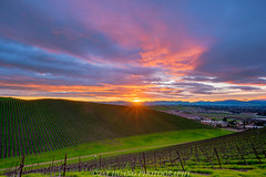 Vineyard Sunrise (Jaykhuang) Tags: rain sunrise livermore vineyard line green spring trivalley eastbay bayarea california jayhuangphotography