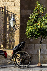 Spain - Cordoba - Carriage (Marcial Bernabeu) Tags: marcial bernabeu bernabéu europe europa south sur spain españa andalus andalusia andalusian andaluz andalucia andalucía cordoba córdoba car carriage carro coche caballos