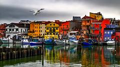 The seagull (Marco Trovò) Tags: marcotrovò hdr venezia venice italia italy building edificio city città mare sea barca boat architetture architecture seagull gabbiano