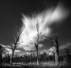 Dead Trees Rising (Wits End Photography) Tags: trees phototechniques landscape tree deadtrees nature monochrome plant sky outdoor cloudy longexposure places clouds bw black blackwhite blackandwhite country exterior gray grey natural outside picturesque rural scenic view white