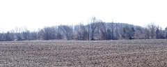 A Row of Trees (joeldinda) Tags: olympus omdem1mkii em1 omd em1ii 2019 spring michigan eatoncounty roxandtownship roxana tree sky fields 4506 march