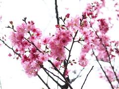 桃園市_18 (Taiwan's Riccardo) Tags: 2019 taiwan digital color evil milc olympusem1 omd leicalens summilux dg fixed 25mmf14 asph 龍德宮媽祖遶境 桃園縣 桃園市