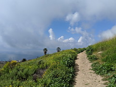 IMG_20190320_110329 (joeginder) Tags: jrglongbeach flowers hiking palosverdes friendshippark