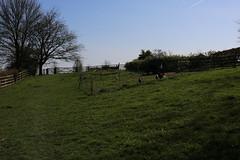 brill walk-190401-8.jpg (Phil Mercer-Kelly) Tags: sunshine spring radiooxford bbc counyryside blossom philmercer getactive brill sheep buckinghamshire europe england uk oxfordshire views bucks health windmill walker oakley walk