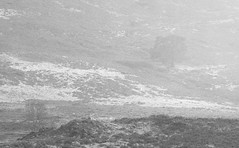 1.5 Trees (ShinyPhotoScotland) Tags: hdr monochrome composite darktable seasonal scotland photography sonya7r3 imagemagickmedian nature strathfionan landscape art minimalist trees canon70200l highlandperthshire pinussylvestris winter camera rannoch blackandwhite toned weather pine equipment rawconversion places perthshire lens vista flora highlands manipulated digikam