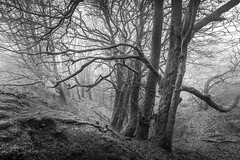 Misty Dell (PKpics1) Tags: dell trees bark wood woods woodland moss leaves black white bw mist eerie porlock exmoor england