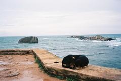 dogwatch (dancearoundaworldburningdown) Tags: 35mm film olympusmjuii