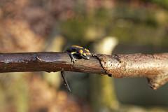 IMG_9729 (Selena & Danny) Tags: rodik roditti slovenia slovenija bosco foglie tree salamandra anfibio