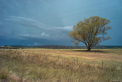 After the storm near Cootamundra (i-lenticularis) Tags: stormclouds ruralscene australia newsouthwales nrcootamundra