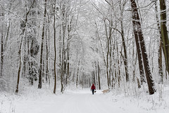 walk with dogs (Rambynas) Tags: lithuania lietuva forest dog winter snow wood tree