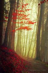 bend (Dyrk.Wyst) Tags: landschaft winter wuppertal backlight baretrees hike landscape leaves mood mystery strollers trees wet redleaves dreamy fall mist bend deepforest