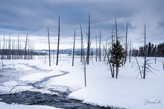 Trees and Ice Grass (Selectivebits) Tags: winter yellowstone snow ice landscape water plant winterbeauty lifejourneyx23