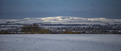 pockets of light on the snowy downs (Redheadwondering) Tags: minolta100200mm sonyα7ii salisburyplain wiltshire winter snow snowday landscape 119picturesin2019 60itsallaboutthelight 60 downs pewseydowns