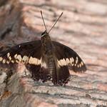 Mount Afadjato peak butterfly thumbnail