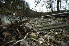 Äste auf Gleis (Markus Holsträter) Tags: nikon d3300 deutschland äste hardenstein witten outdoor outside gleis ground bokeh