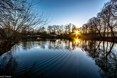 abends am Teich/ in the evening at the pond (Andi Fritzsch) Tags: pond teich wasser water tree trees baum sun sunset sunsetfotography sonnenuntergang sonne natur nature naturephotography landschaft landscape landscapephotography nikond7100 sigma1020mm flickerunitedaward
