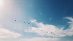 seagulls (vhickey25479) Tags: birds sunny blue sky beach seagull