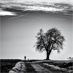 After a long Day's Work... (Ody on the mount) Tags: abendlicht anlässe bäume em5ii fototour gegenlicht himmel landschaft mzuiko40150 omd olympus pflanzen rahmen silhouette weg wolken bw clouds frame landscape monochrome sw sky tree ways