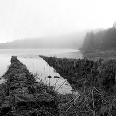 foggy lake (salparadise666) Tags: rolleiflex sl66 planar 80mm fomapan 100 boxspeed caffenol cl 45min nils volkmer azores landscape 6x6 square medium format dof