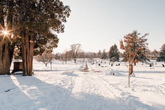 Vancouver-Winter-Walks-18 (_futurelandscapes_) Tags: vancouver winter snow cold february mountainview cemetery trees arboretum sunset evening graves sunny blue white vintage