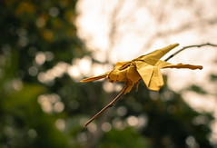 Dragonfly (Rohit KO) Tags: origami papercraft paper paperfolding fold folding art craft artur biernacki drangonfly yellow vog rohit ko nature insects photography 45x45