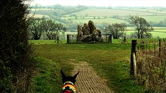 evie approaching the Whispering knights - Evie cam view! (eucharisto deo) Tags: rollright stones ancient monument standing cotswold stone age early neolithic burial chamber grave 3800bc evie dog aonb english heritage eh oxfordshire whispering knights