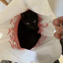 Me he comprado unos ojos (Joaquín Galindo MIlián) Tags: mascotas ojos pantera aragón teruel anímales animales spain españa joaquíngalindomilián negro cat gato