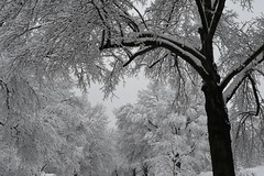 More snow (KsCattails) Tags: kansas kathrynkennedy kscattails neighborhood snow snowstorm tree