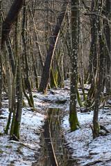 """""""reflet enneigé"""" (leguen.maxime) Tags: neige forêt hiver soleil nature 2019 loiret"""