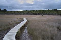 Tautuku Estuary walkway (Kiwi Jono) Tags: tautuku estuary walkway walk board outdoor smcpfa31f18 limited pentax fullframe