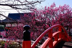DSC_0128 (ponkiti3) Tags: 下鴨神社 京都 梅 植物 風景
