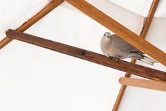 Bird (JarkkoS) Tags: 2470mmf28eedafsvr animal bird d850 dubai grandhyattdubai hotel uae