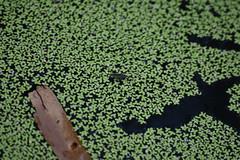 bug (22Lavender22) Tags: elements nature d3400 nikon wildlife australia