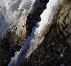Sans titre (bd168) Tags: glace ice soleil sun scintillement champignons mushrooms arbre tree tronc trunk bokeh ombre shadow cristaux cristal em10markii m1240mmf28pro forest forêt closeup grosplan lumière