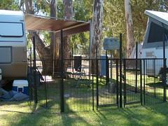 Cohuna dog show (14) (Boobook48) Tags: australia dogshow cohuna victoria