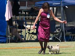 Cohuna dog show (7) (Boobook48) Tags: australia dogshow cohuna victoria