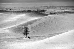 Palouse Winter Locus Tree (Ryan McGinty) Tags: scenic sunrise sonya7iii rollinghills snow winter lonetree washington idaho palouse landscape ryanmcginty