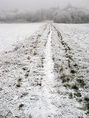 Ich sag dir Dank, Gott Vater gut (amras_de) Tags: wiesbaden dotzheim stegerwaldstrase sauerland winter hibierno zima hivern vinter vintro invierno talv negu talvi hiver geimhreadh tél vetur inverno hiems wanter žiema ziema ivèrn iarna mmernu kis raureif softrime cencelladablanca antzigarzuri givremou galaverna ruigerijp escarchabranca baum træ stablo boom árbol drvo arbre strom tree arbo puu zuhaitz crann fa arbore tré albero arbor medis koks tre drzewo árvore àrvulu drevo träd agaç