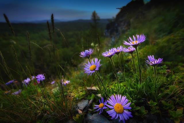 Обои трава, цветы, природа, склон, Павел Сагайдак картинки на рабочий стол, раздел цветы - скачать