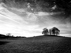 Message in the skies (john29ch) Tags: england countrylife ukphotos countryside bnw trees landscape